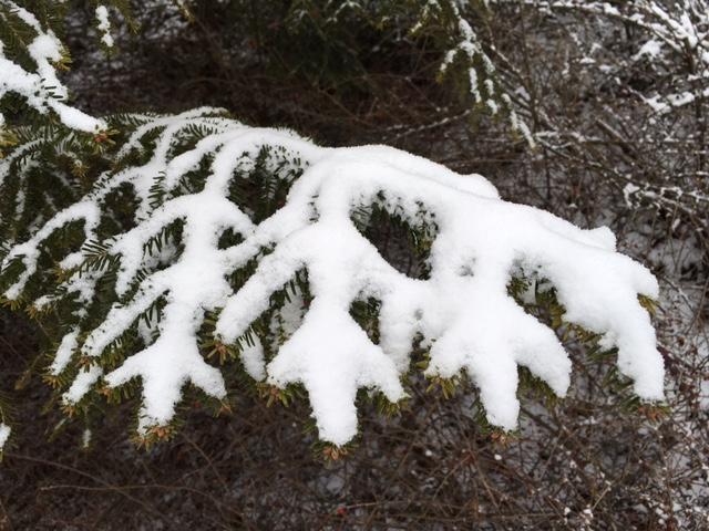 Snijeg-2016-3